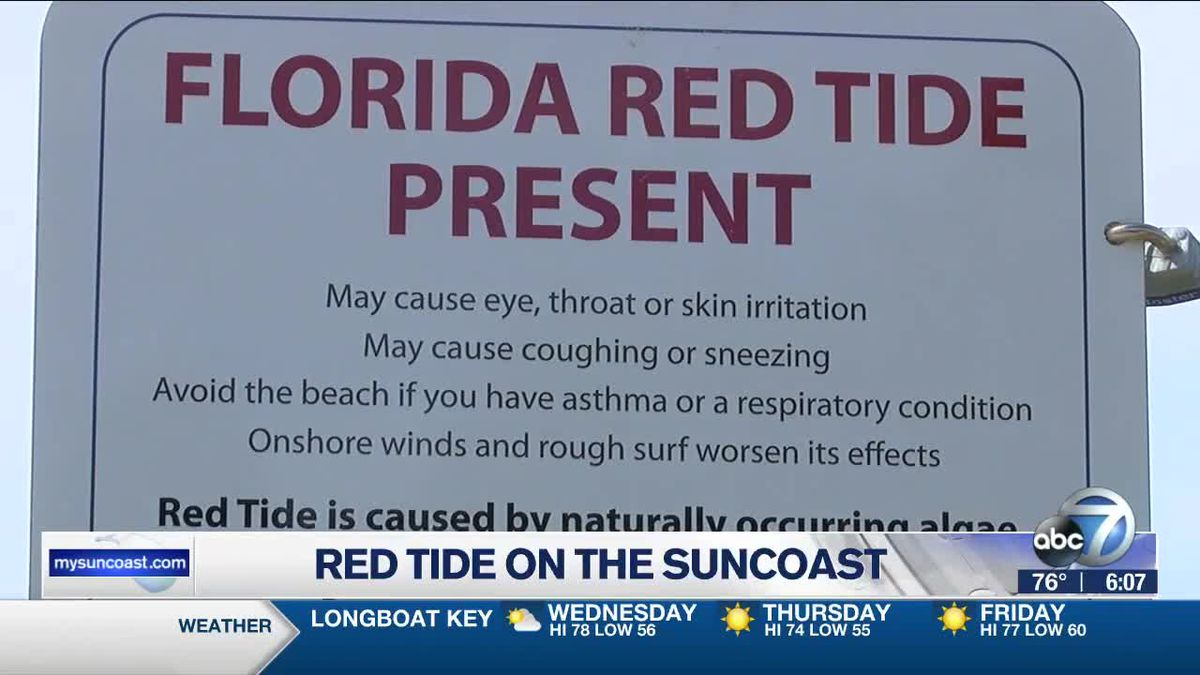 Red tide watch along the Suncoast