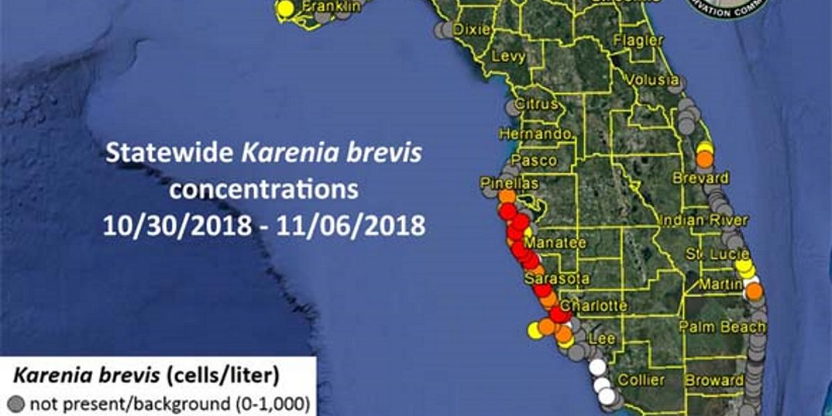 MIDWEEK RED TIDE UPDATE: High concentrations continue along the Suncoast