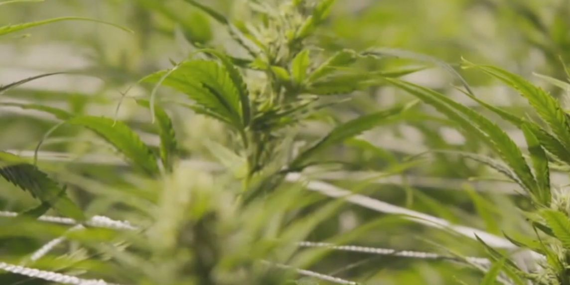 Sarasota County commissioners deny proposal for new medical marijuana dispensary, here's why