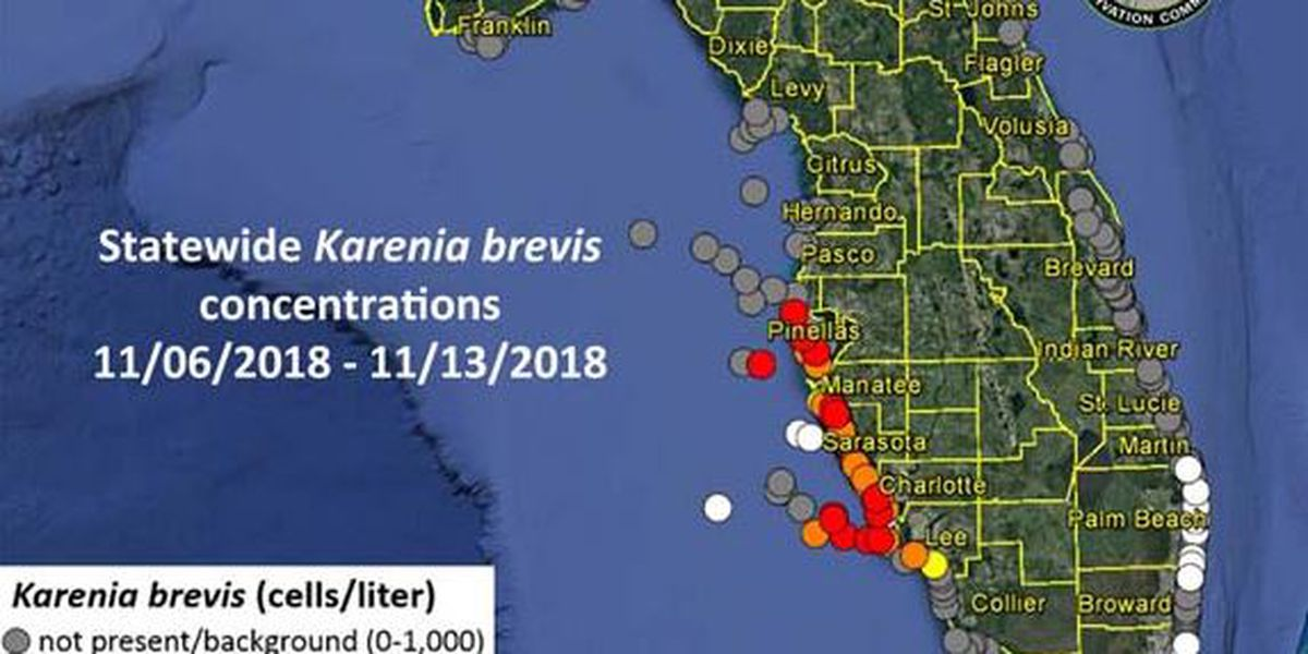 RED TIDE REPORT: High concentrations increasing on the Suncoast