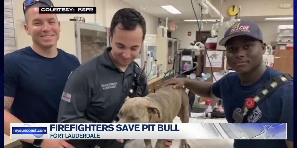 Florida firefighters save a pit bull's life