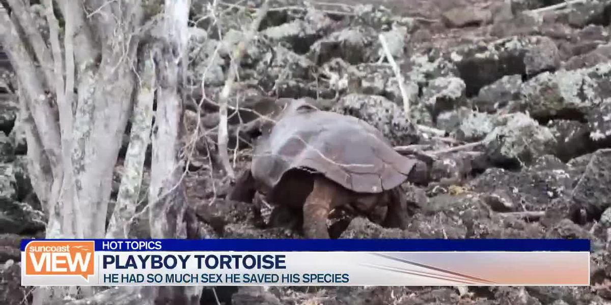 Quay Concerns, Midlife Crisis, and a Tortoise Playboy | Suncoast View