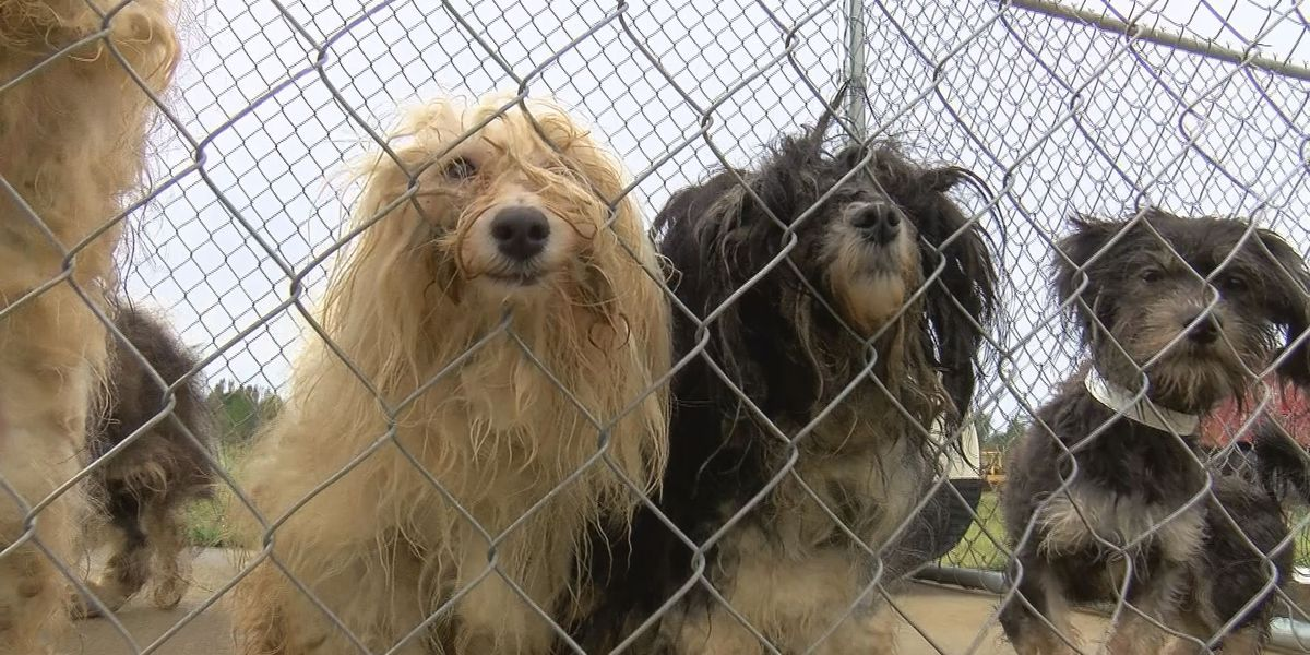 Sarasota County puppy mill ban going into effect in July