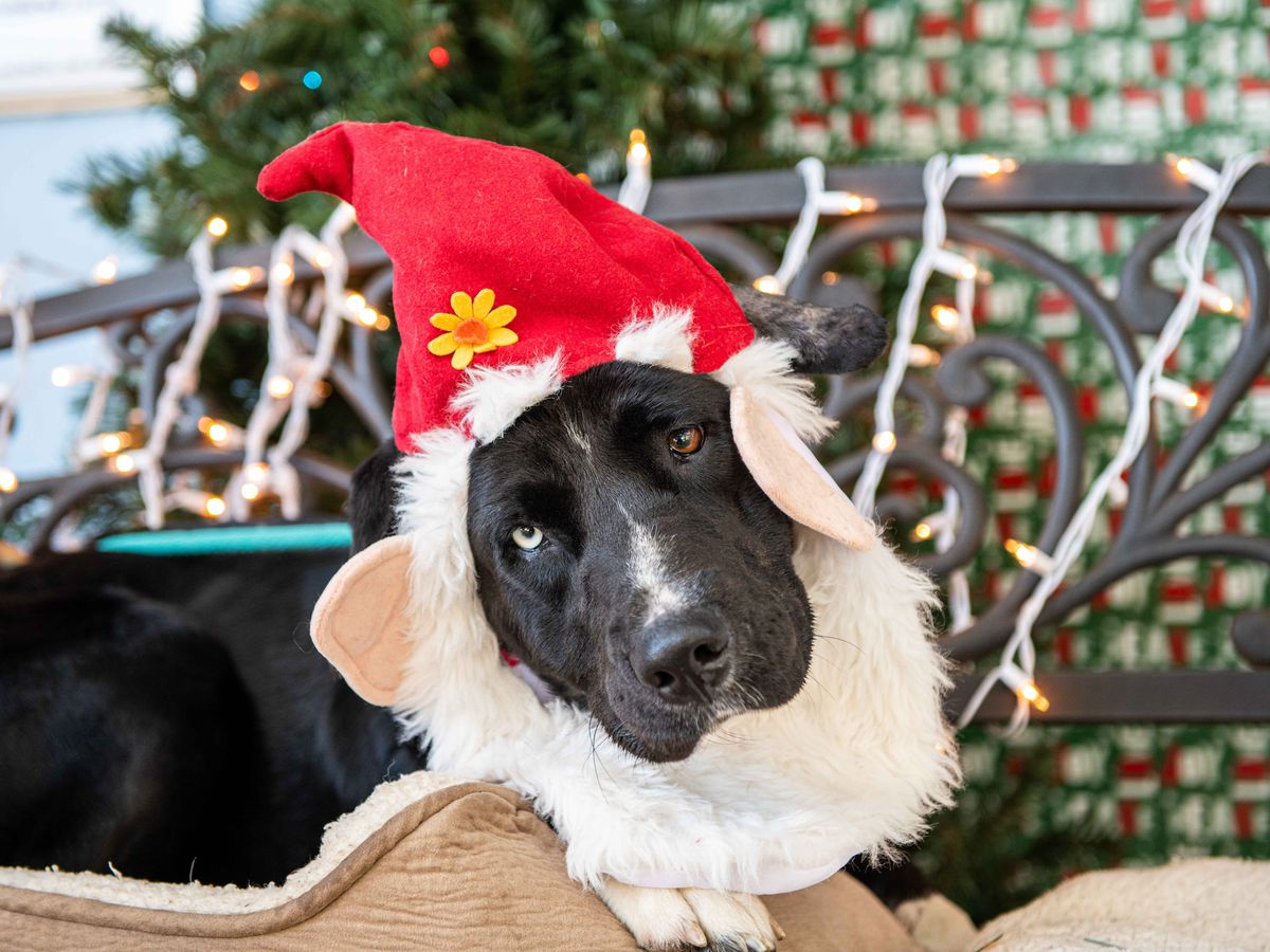 Manatee County Animal Services 'Home for the Holidays' drive is underway