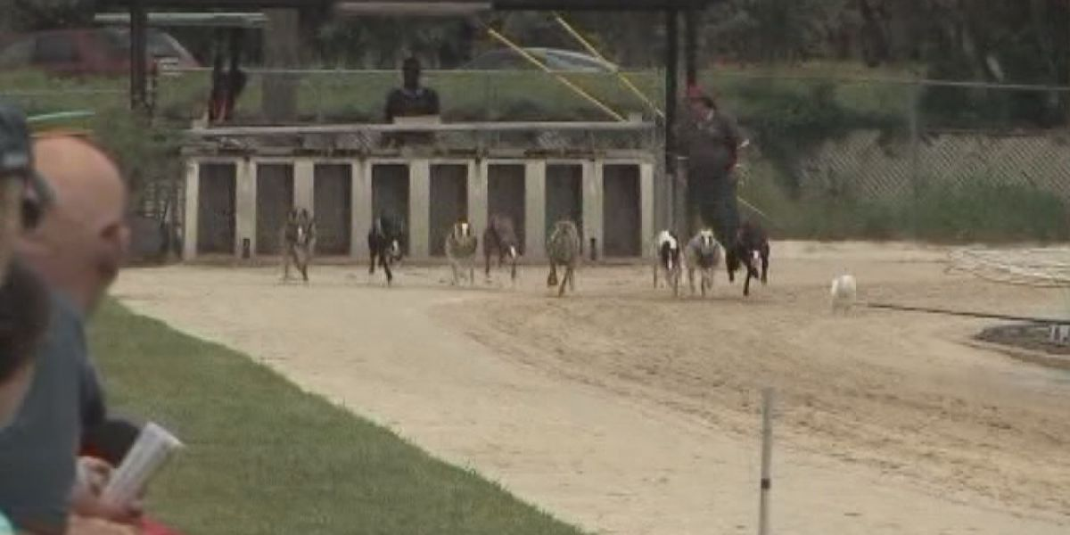 Greyhound Racing starts, could be the last season for Sarasota Kennel Club after passing of Amendment 13