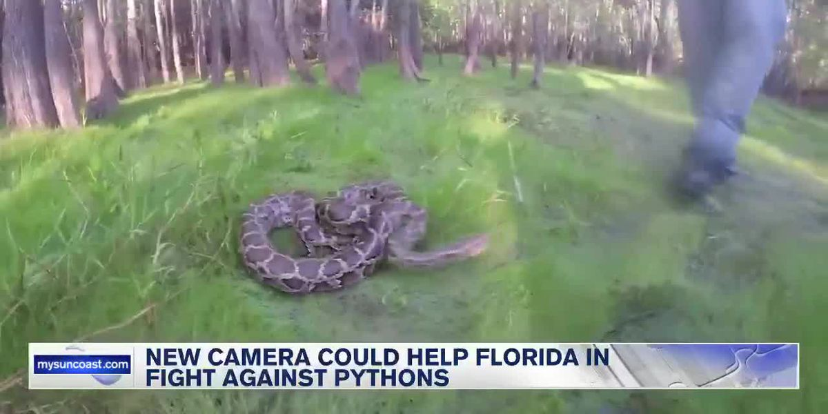 New camera could help Florida in fight against pythons