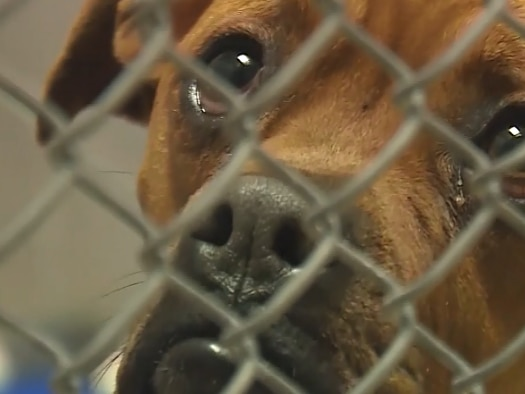 GRAPHIC: Woman, 52, dies after being mauled by her own dogs