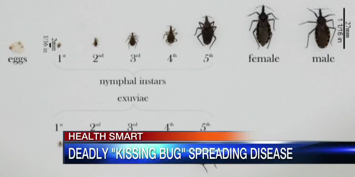 Deadly Kissing Bug Spreads Disease