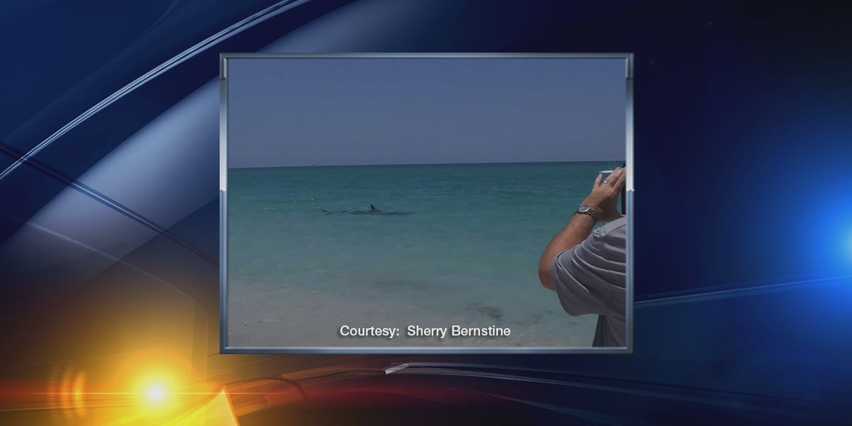 Shark sighting at Nokomis Beach forces people out of the water