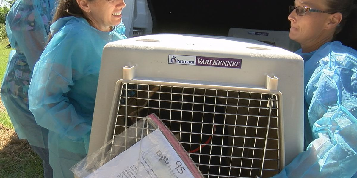 Hundreds of animals fly into Florida from the Bahamas, Nate's Honor Animal Rescue takes them in