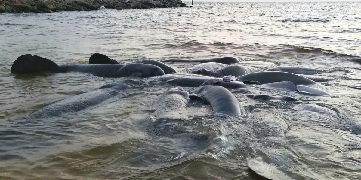 Record number of Florida manatees killed by boaters