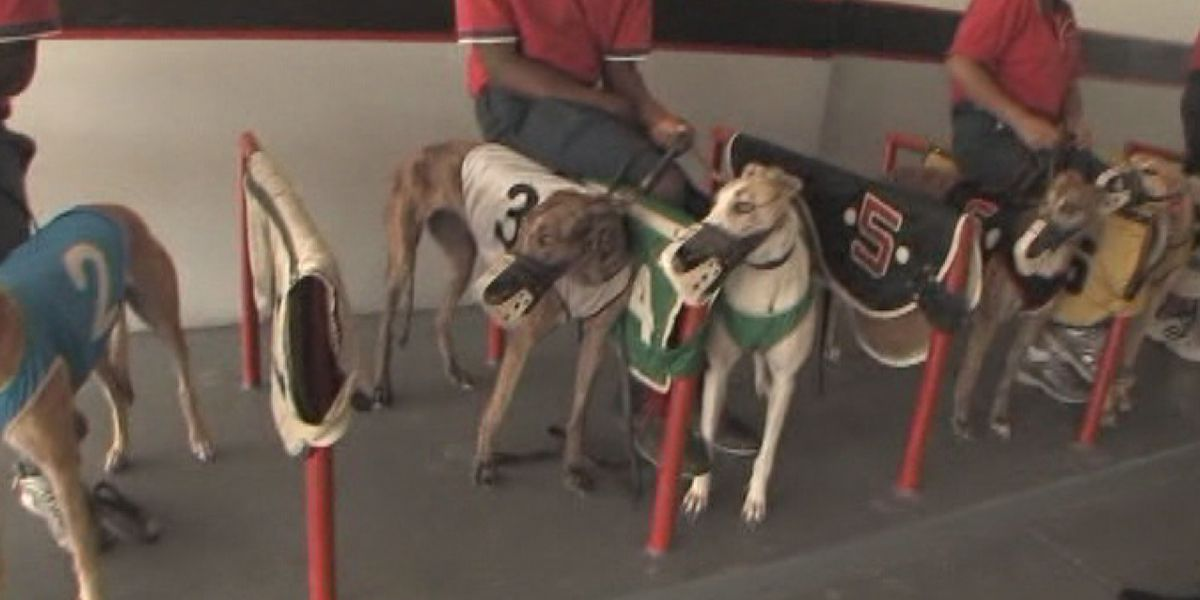 By 2020 there will be no more dog racing in Florida