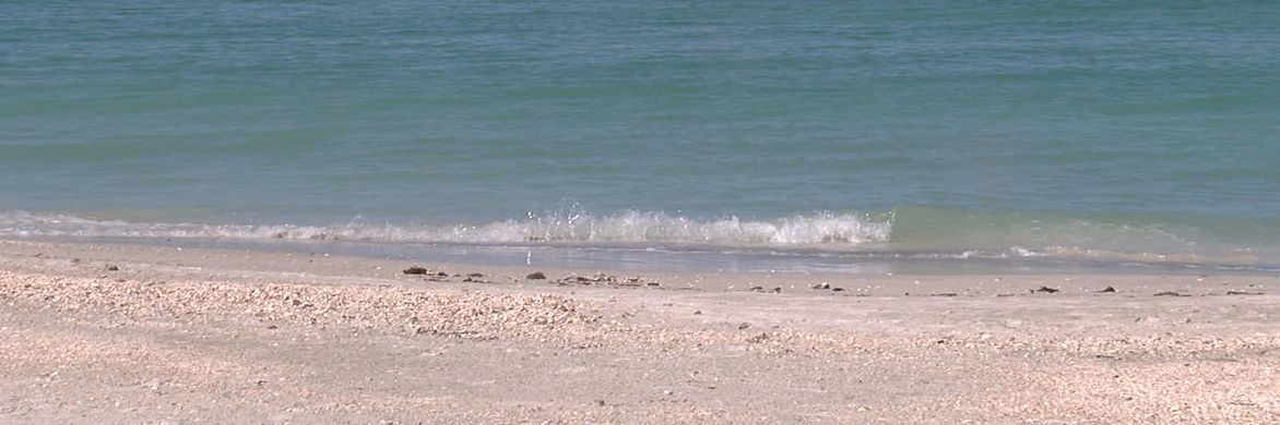 What to do if you see a shark or stingray in the water