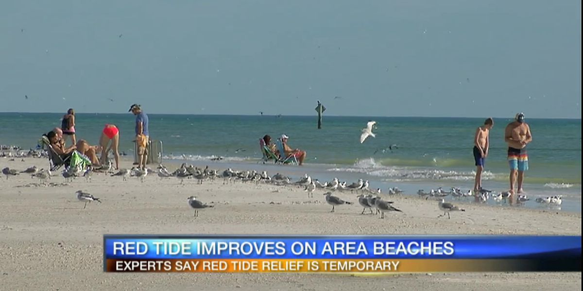 Video: Video: Suncoast beachgoers get temporary relief from red tide
