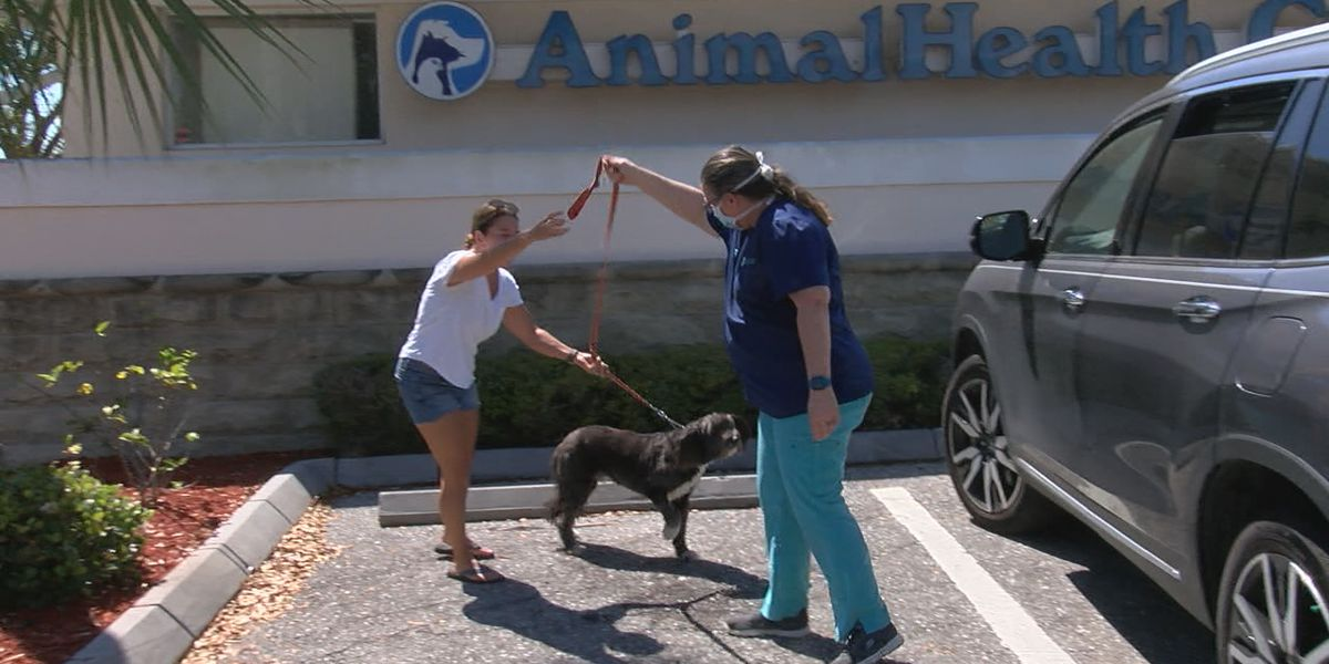 Vet in Englewood offering curb service to take care of animal's medical needs