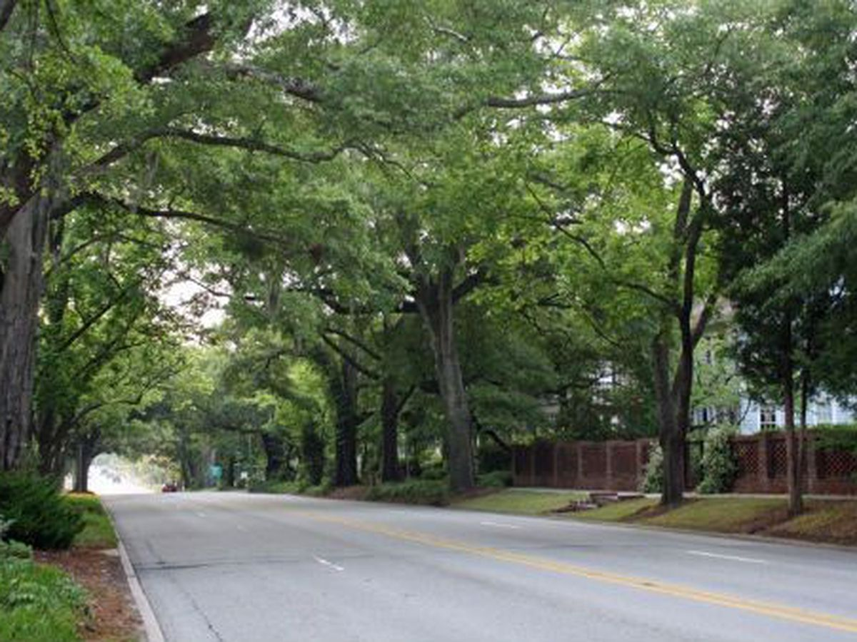 'Community Canopy' program offering free tree trees to reduce energy bills is underway