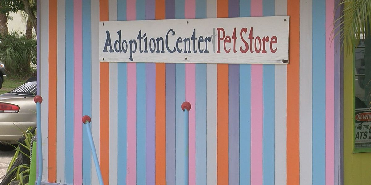 Englewood Animal Rescue Sanctuary property up for sale; employees look to the future
