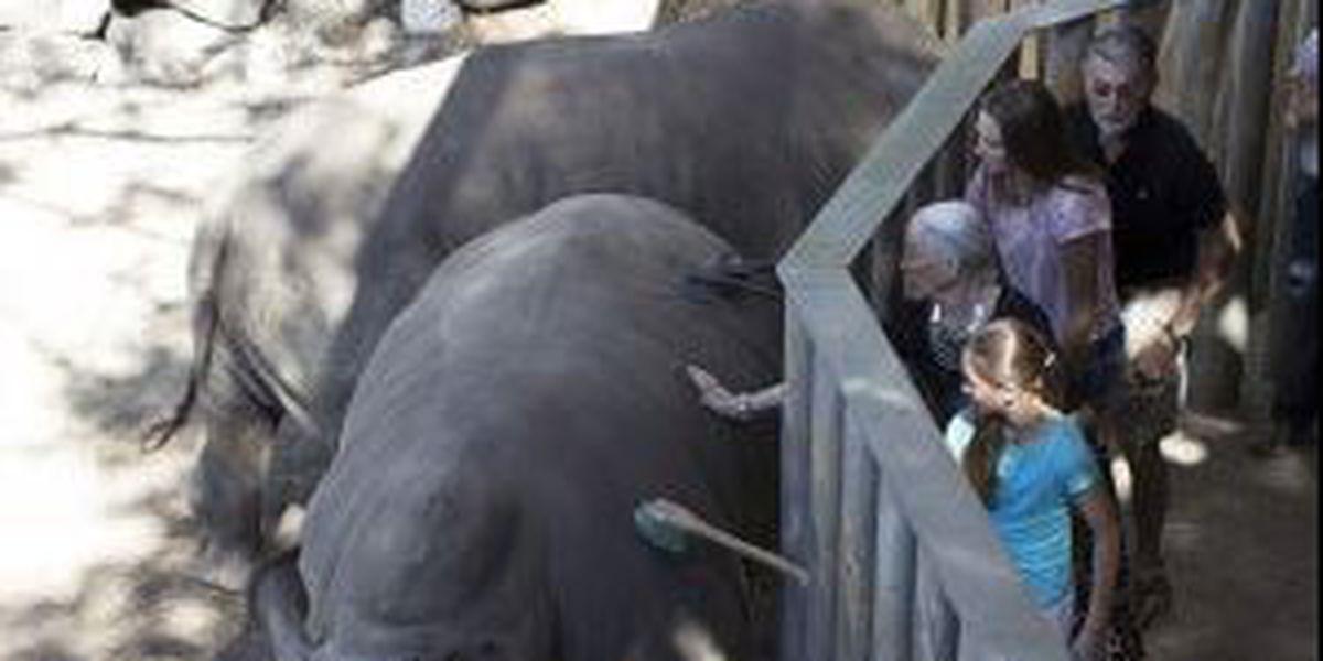 Toddler hurt falling into rhino exhibit at Florida zoo