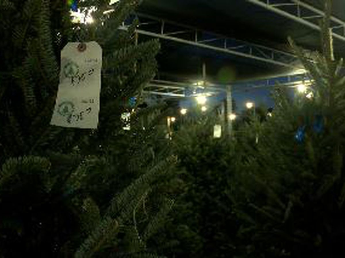 Boys & Girls Clubs of Manatee County's Christmas Tree Lot open for business