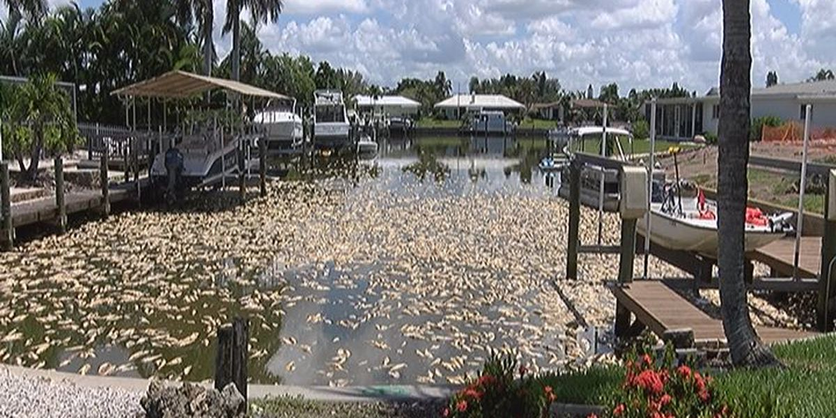 Manatee County Seeking Fishermen to Help Clean Red Tide Kills at Residential Homes